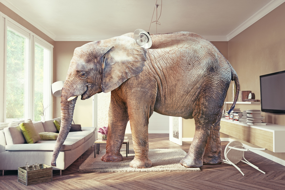 Elephants Should BeFree